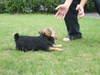 2008_0922asuka0285